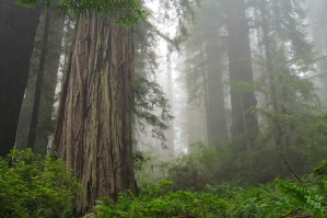 Go see the redwoods. Credit: Craig Wolf