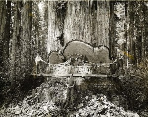 Loggers for Pacific Lumber take a break. Credit: Humboldt State University Library