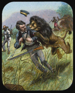 David Livingstone 'discovers' being attacked by a lion.